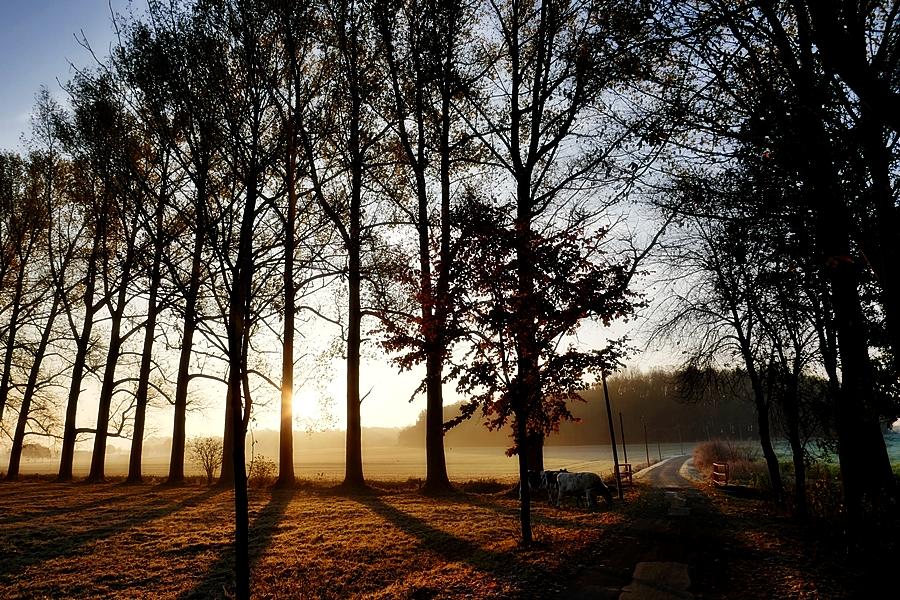 12-November ein ganz besonders schöner Tag!